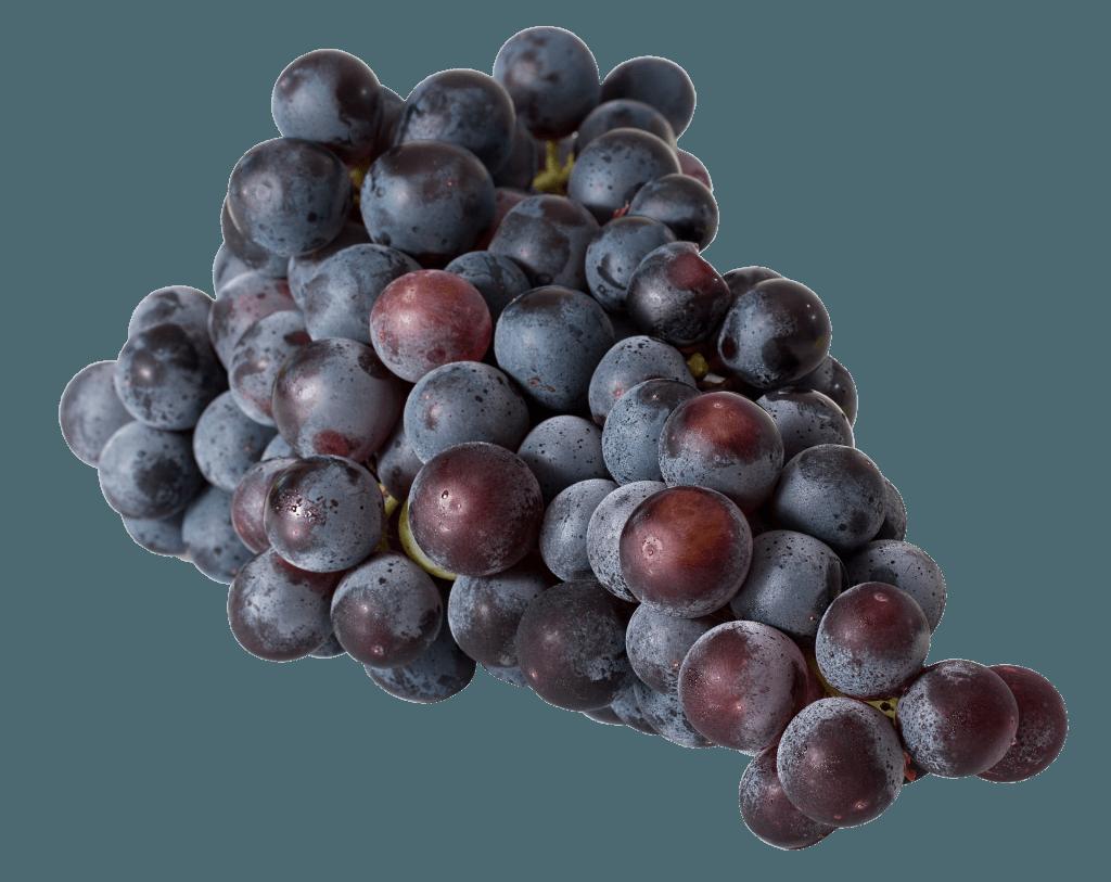 OPC Kapseln - Antioxidantien und freie Radikale auf konsumguerilla.de